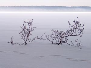 Furesoe-Grundejer-fotos-201401-(23)
