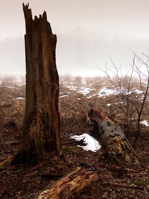 Furesoe-Grundejer-fotos-201401-(25)