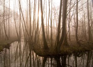 Furesoe-Grundejer-fotos-201401-(30)