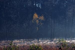 Furesoe-Grundejer-fotos-201401-(7)
